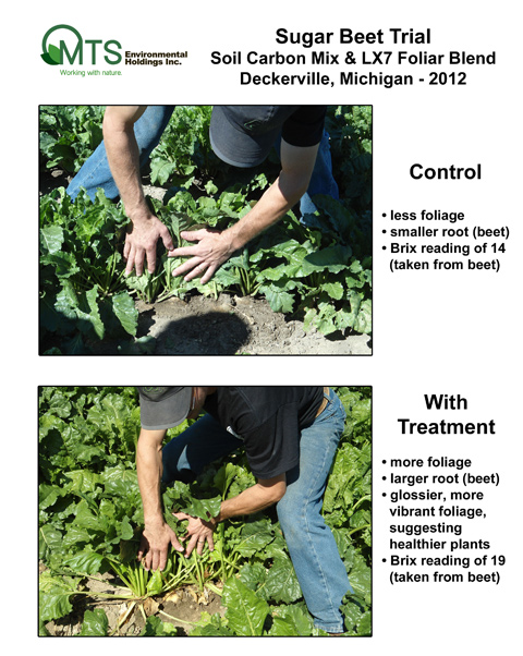 Sugar-beet-plants-2012