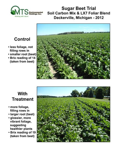 Sugar-beet-rows-2012